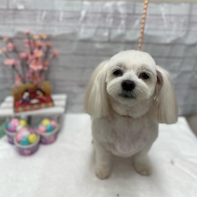 武蔵浦和の不動産・埼京ホーム マスコット犬